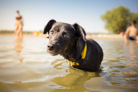 underwater ocean: Black mixed breed dog in water portrait