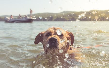 wistful: Very close portrait of swimming dog