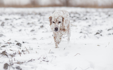 tracking: Dog tracking in snow