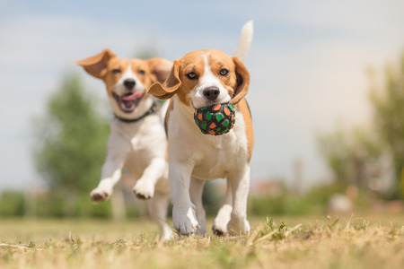 Happy dogs having fun with ball