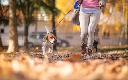 Girl with her Beagle dog jogging in park Standard-Bild