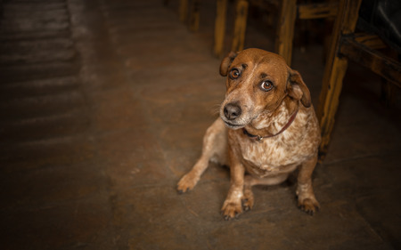 restaurant tables: Dog sitting in pet friendly bar