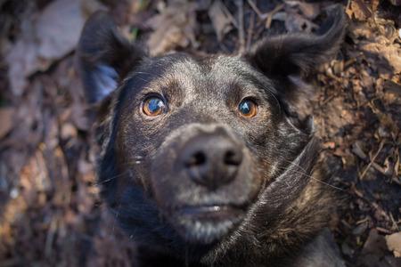 animal idiot: Mixed breed dog selfie photo