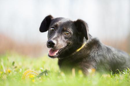 Happy adopted mixed breed dog in garden Standard-Bild
