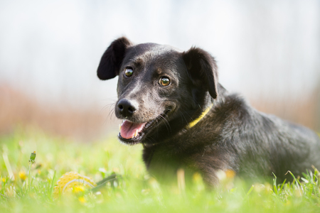Happy adopted mixed breed dog in garden Stock Photo