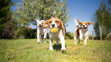 Group of dogs playing in the park Stock Photo