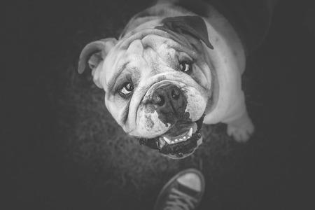 ingram: Spending time with English Bulldog