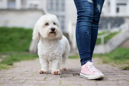 Girl walking with white fluffy dog Standard-Bild