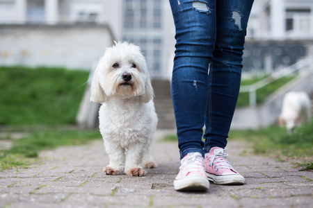 Girl walking with white fluffy dog Stock Photo