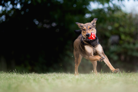 Happy adopted mixed breed dog playing with ball Standard-Bild