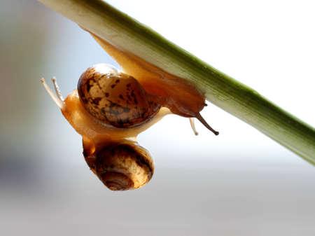 iuml: snail Stock Photo