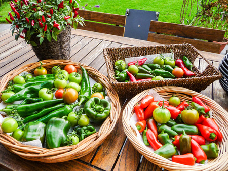 unripened: Large variety of homegrown tomatoes and capsicum presented on a wooden table