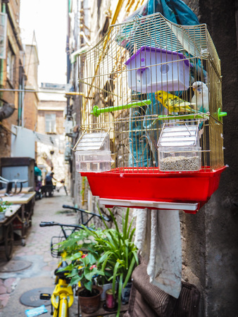 Pet bird hanging outside on the street in the old French concession in Tianjin, China