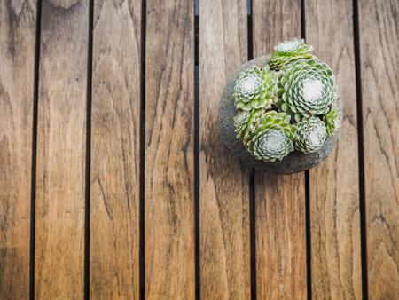 Overhead of a succulent cobweb houseleek ( sempervivum arachnoideum) in a concrete pot on a wooden background Stock Photo