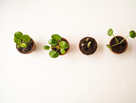 Propagating succulents in small terracotta pots Stock Photo