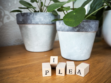 Missionary plant or pilea peperomioides on a wooden table with lettering cubes