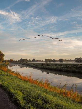 Flock of birds flying over the river Dijle at the Mechels Broek nature park in Muizen, Belgium. This marschland is well known for birdwatching.