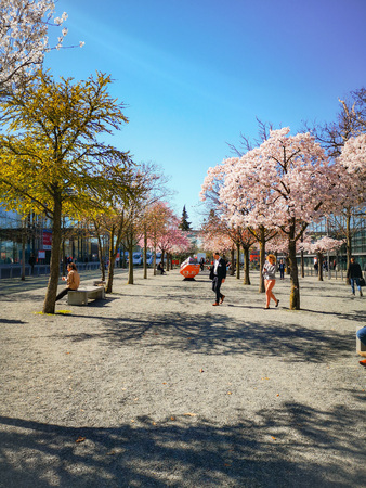 Hannover, Germany - April 2019: People enjoying the blossoming trees at the Hannover Messe fairgrounds during springtime in April Sajtókép