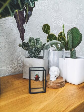 Preserved colorful beetle, porcelain animal head in a glass bell jar and cactus plants on a wooden coffee table giving an urban jungle feeling Stock fotó