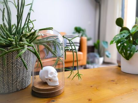 White porcelain animal head in a glass bell jar on a wooden coffee table in a light modern living room with numerous plants creating an urban jungle Stock fotó