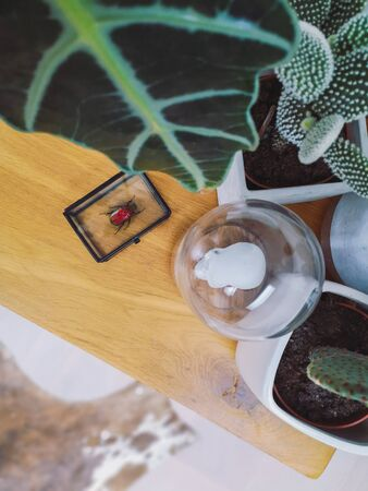Preserved red beetle on a coffee table with numerous houseplants creating an urban jungle feeling
