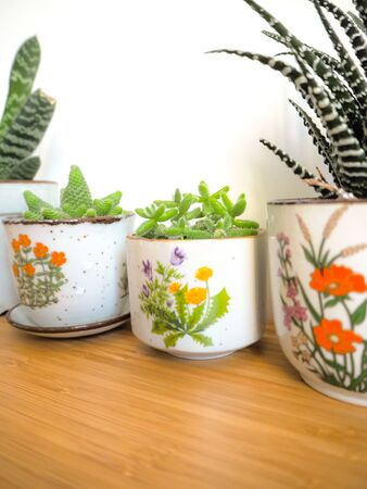 Small succulents in vintage flower pots on a wooden desk against a white background Stock fotó
