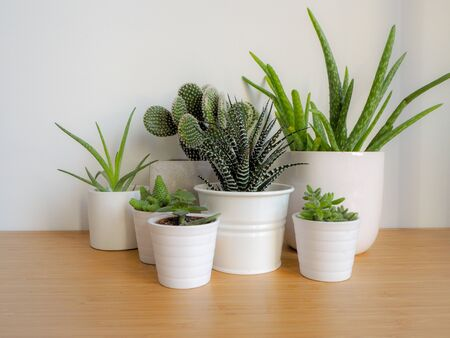 Small succulents in white pots on a wooden desk against a white background