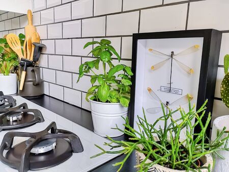 Framed taxidermy dragonfly art in a black and white subway tiled kitchen with numerous plants Stock fotó