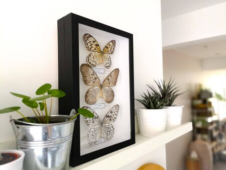 White floating shelf with framed taxidermy butterflies display and small houseplants in a black and white interior