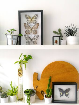 White hanging shelves with numerous plants and framed taxidermy insect art such as butterflies and a colorful beetle