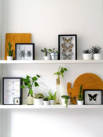 White hanging shelves with numerous plants and framed taxidermy insect art such as butterflies, beetles and dragonflies
