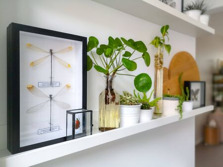 White hanging shelves with framed taxidermy insect art such as dragonflies and a beetle in a black and white interior with plants