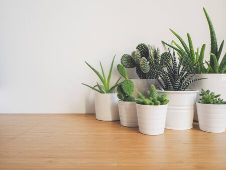 Small succulents in white pots on a wooden desk against a white background Stock fotó - 131910390
