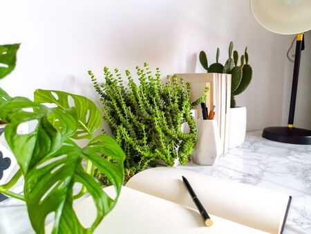Bright white work interior with indoor plants and stationery creating a no stress work environment