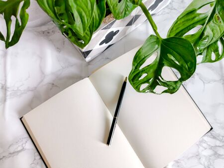 Blank notebook on a office desk with potted plants such as a monkey mask plant on a white background