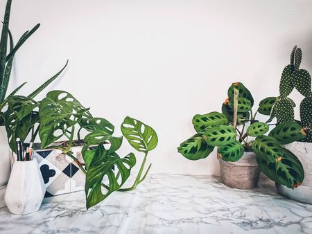 White clean marble desk with numerous green plants such as a monkey mask plant
