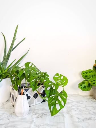 White clean work desk with numerous green plants for a relaxing no stress work environment Stock fotó
