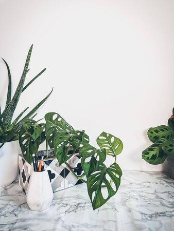 White clean work desk with numerous green plants for a relaxing no stress office space