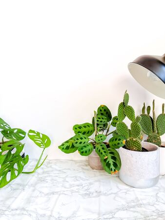 White clean marble desk with numerous green plants such as a monkey mask plant and cacti