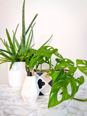 White clean work desk with numerous green plants such as a aloe vera and monkey mask for a relaxing no stress office space