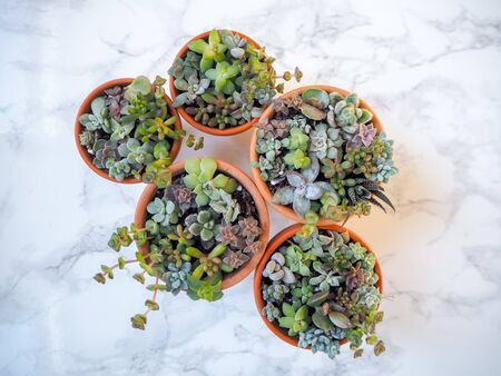 Small colorful succulent arrangements in terracotta pots on a white marble background Stock fotó