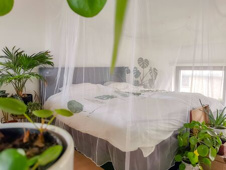 Bright white bedroom filled with numerous potted green plants and flooded in natural light
