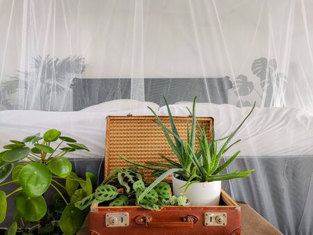 Recycled vintage suitcases filled with green houseplants in front of a bed