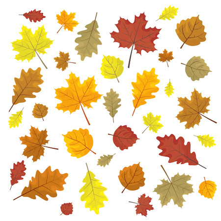 Set of colorful autumn leaves. Design elements Vector illustration. Leafs in random. White background. Illustration