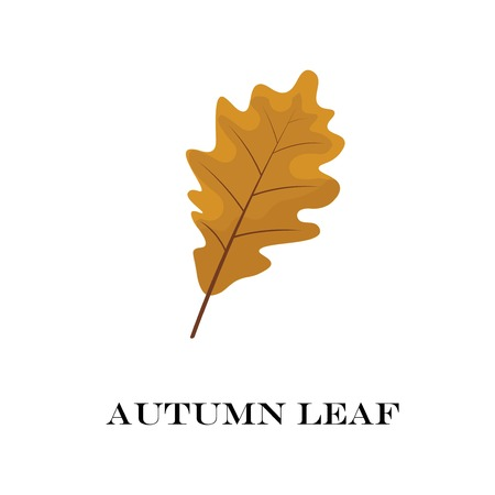 autumn leaves isolated on white background. simple cartoon flat style, vector illustration.