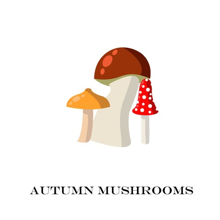 fly agaric: Mushrooms on the white background. vector illustration.
