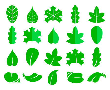 Different leaf set. Vector icons. Design eco elements isolate on white background. Green leaf tree, illustration of natural leaf for your web design. Stock Illustratie