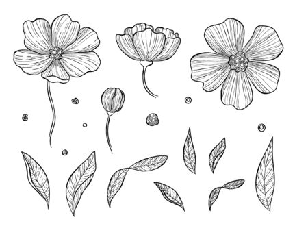 Vector illustration of botanical set. Wild rose hip or rosehip blooming flowers, buds, branches, petals, berries. Natural herb, cosmetics and skincare ingredient. Vintage hand drawn style.