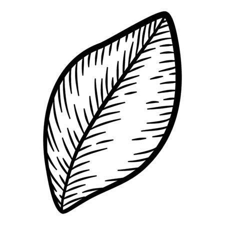 Plant tree leaf icon. Hand drawn illustration of plant tree leaf vector icon for web design Ilustração