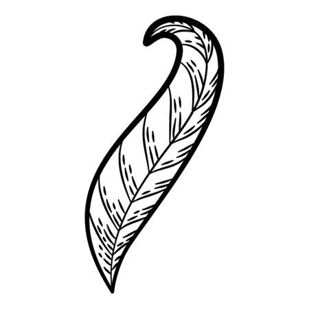 Plant botanical leaf icon. Hand drawn illustration of plant botanical leaf vector icon for web design